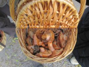 La cesta de mimbre es fundamental para la reproducción de las setas en una jornada de recolección.