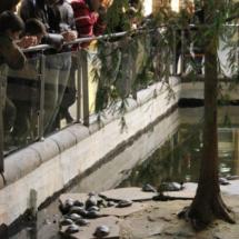 Las vallas que rodean el estanque de Atocha suelen estar tan abarrotadas como el propio estanque.