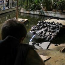 Las tortugas de Atocha son toda una atracción para los más pequeños.