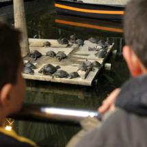 Muy curiosos, los pequeños advierten cada uno de los movimientos de los galápagos.