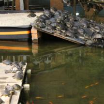 Tortugas y peces, los habitantes más extraños de la estación de Atocha.