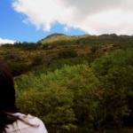 Hayedo de Montejo: un bosque encantado para niños