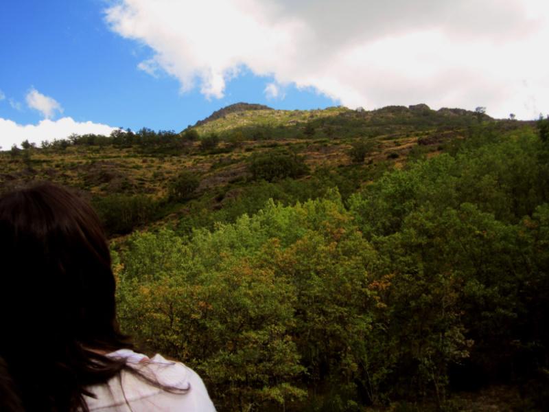 Vista del Hayedo de Montejo