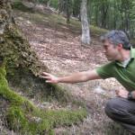 2 bosques cerca de Madrid para ir en otoño