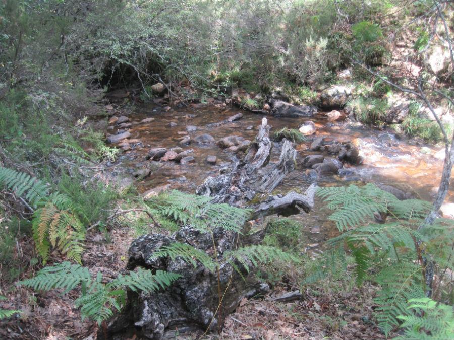 El Hayedo de Montejo está regado por las aguas del río Jarama.