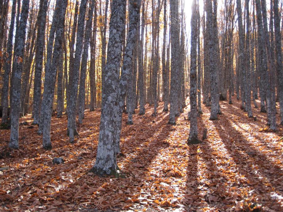 Los bosques tienen un atractivo especial para los niños, especialmente para los que se crían en grandes ciudades.