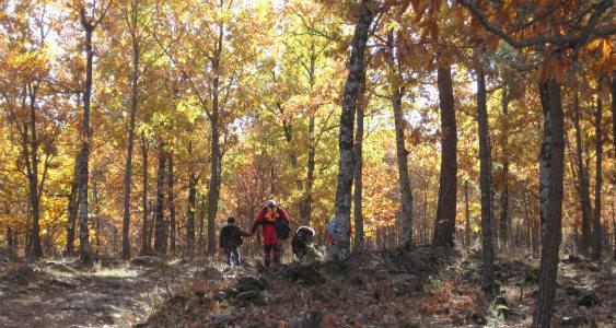 En otoño, el castañar de El Tiemblo es una delicia para los sentidos de padres e hijos.