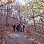 El Castañar de El Tiemblo: un paseo entre árboles