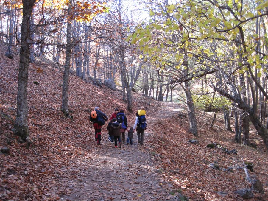 La ruta por el castañar de El Tiemblo es de sólo 4 kilómetros.