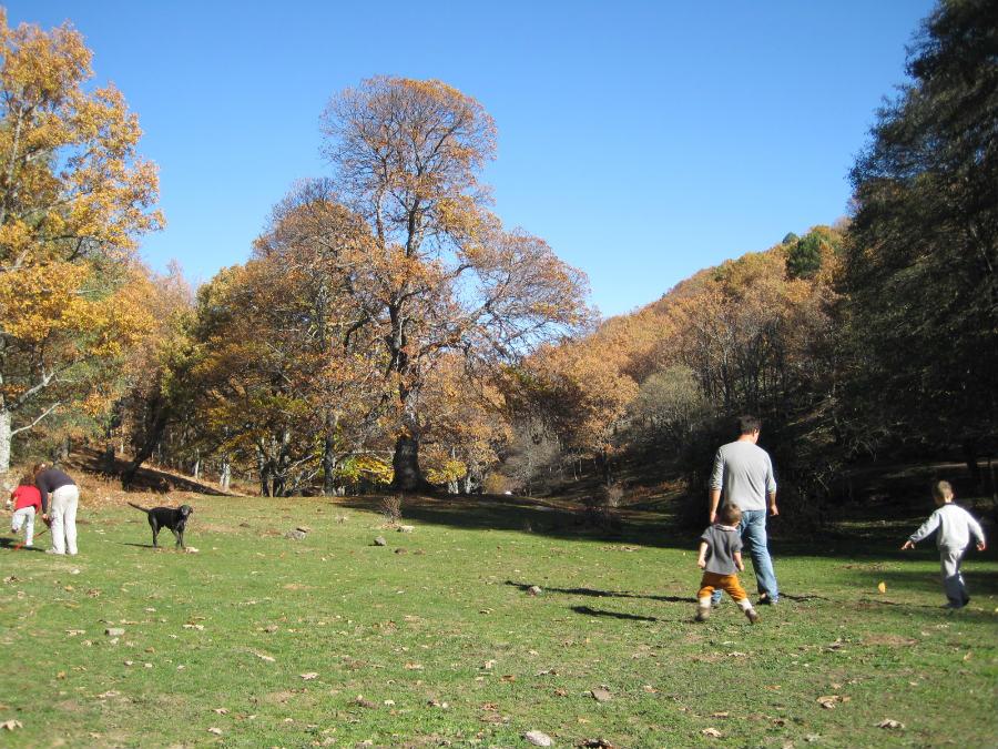 En la zona del castañar de El Tiemblo hay una explanada en la que se puede correr y jugar.