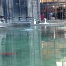 Ocas en el claustro de la catedral de Barcelona