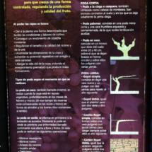 Museo del Vino de Peñafiel: la poda