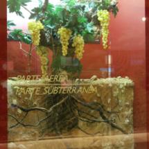 Museo del Vino de Peñafiel: viña