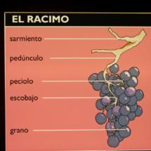 Museo del Vino de Peñafiel: el racimo