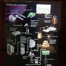 Museo del Vino de Peñafiel: vino blanco
