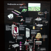 Museo del Vino de Peñafiel: vino tinto