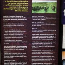 Museo del Vino de Peñafiel: la plantación