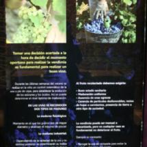Museo del Vino de Peñafiel: la vendimia