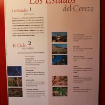 Paneles explicativos nos lo cuentan todo sobre la cereza en este Museo
