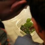 Consejos para criar gusanos de seda