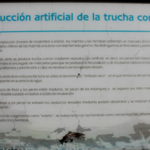Cartel explicativo sobre la reproducción de la trucha