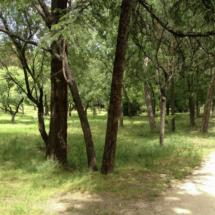 Descubrimos el parque Quinta de los Molinos, en Madrid