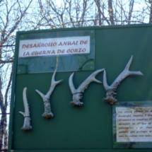 Cañada Real, centro de recuperación de fauna ibérica