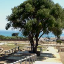 Vista de las ruinas de Baelo Claudia con la playa de Bolonia al fondo