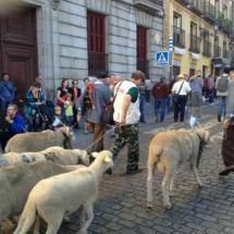 Los pastores reivindican, con sus rebaños, la trashumancia y el paso de ganado por las cañadas reales.