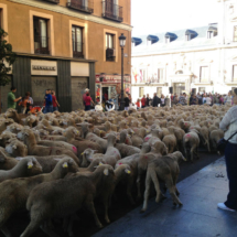 La fiesta de la trashumancia se celebra cada otoño en el centro de Madrid