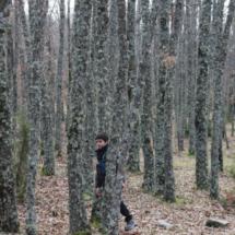 En la ruta por la Cascada del Purgatorio se atraviesa un bosque de pequeños robles