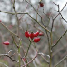 En invierno, ademñas de nieve, también podéis encontrar flores de temporada en la Cascada del Purgatorio