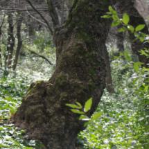 Árbol del Parque del Capricho