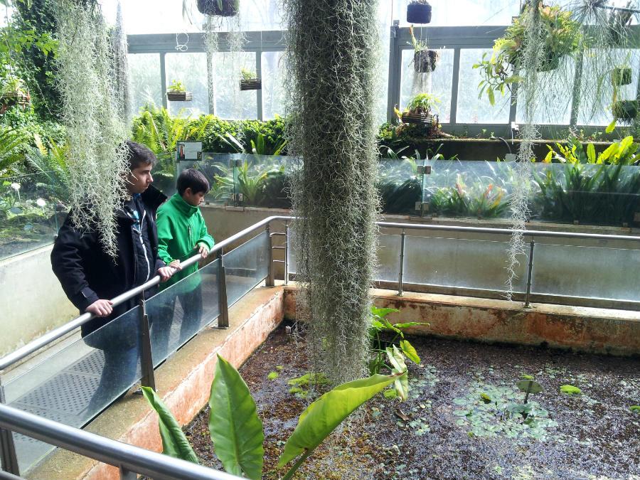El jard n bot nico de madrid con los ni os for Precio entrada jardin botanico madrid