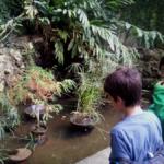 El Jardín Botánico de Madrid, con los niños