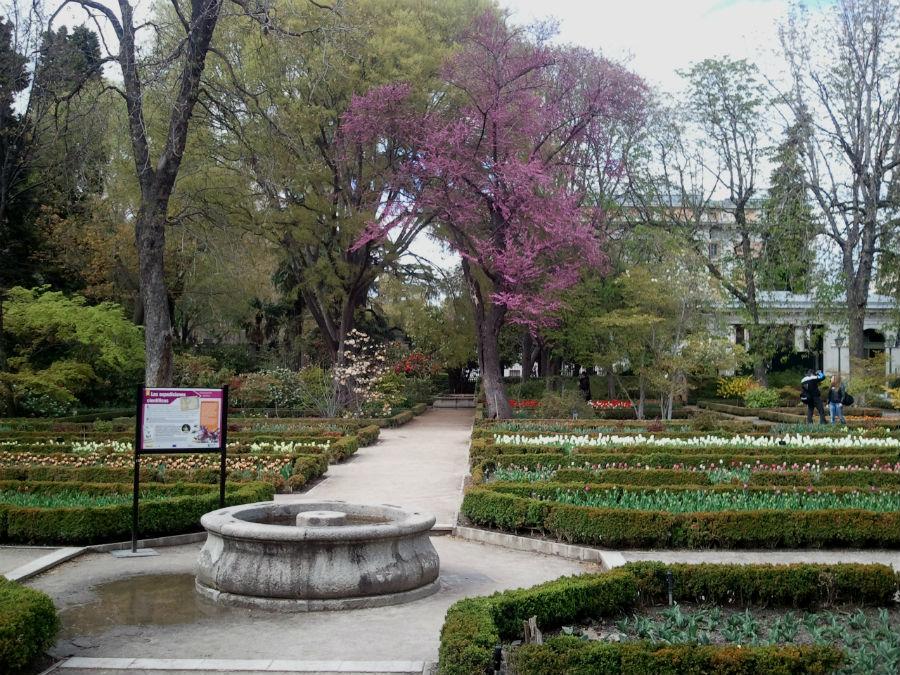 El jard n bot nico de madrid con los ni os for Jardin botanico madrid