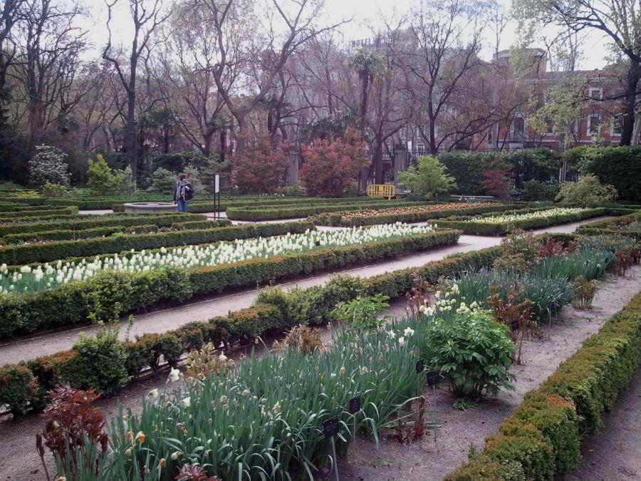 el jard n bot nico de madrid con los ni os On jardin botanico tarifas