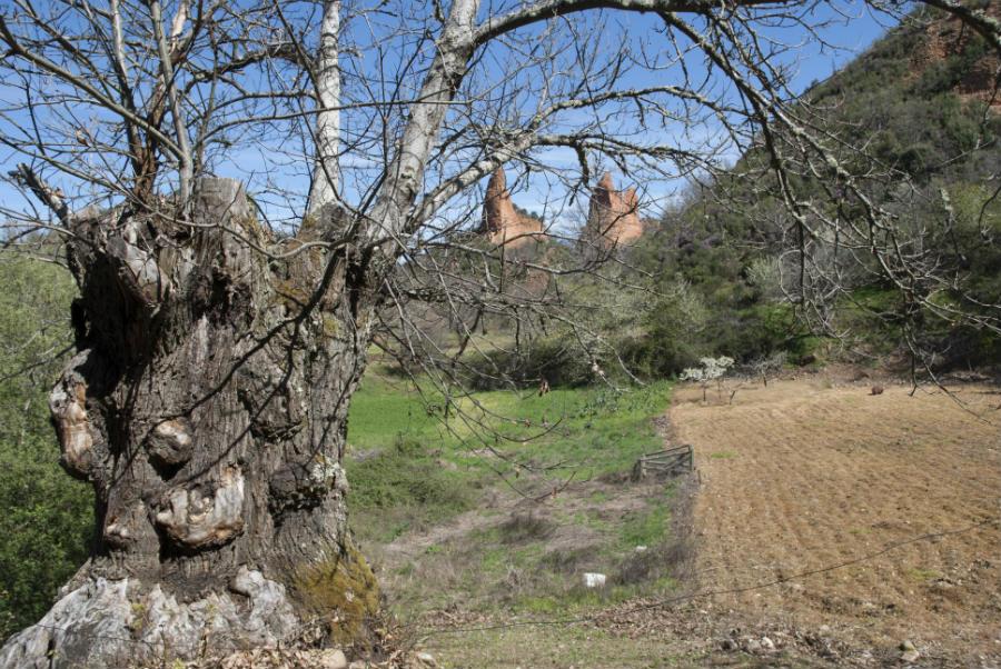 Además de la mina, los romanos trajeron los castaños al Bierzo