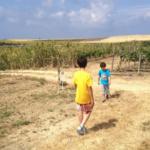 Visitamos la bodega y almazara Sancha Pérez con los niños