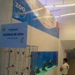 Dónde comprar gusanos de seda en Madrid