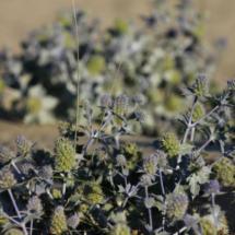 Las dunas están llenas de cactus como éste, pero se pueden encontrar huecos libres para sentarse en la arena
