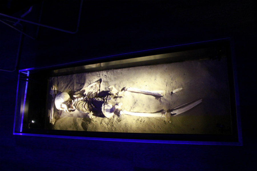 Al inicio de la exposición se puede ver el esqueleto de Mattan