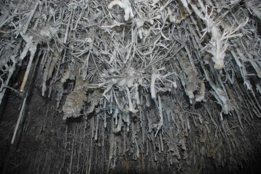 Helictitas en la Cueva de El Sopalo