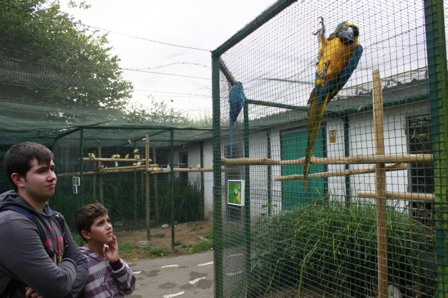 Aviario del Zoo de Santillana del Mar