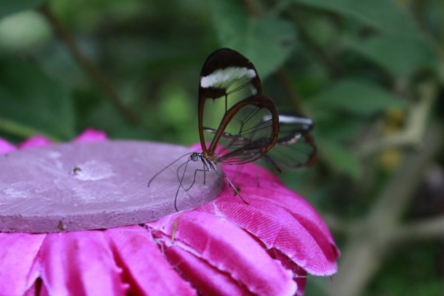 Las mariposas ocupan un espacio importante en el Zoo de Santillana del Mar