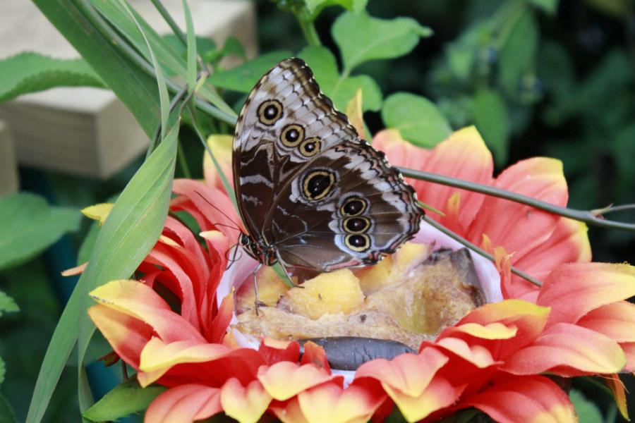 Jardín de las Mariposas en el Zoo de Santillana del Mar