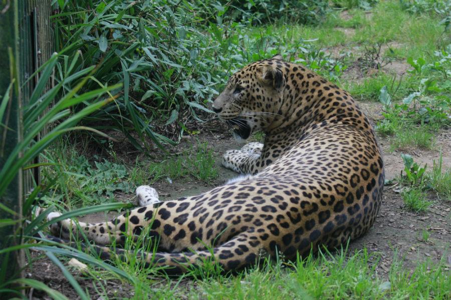 Aunque los precios no son populares, visitar el Zoo de Santillana del Mar vale la pena