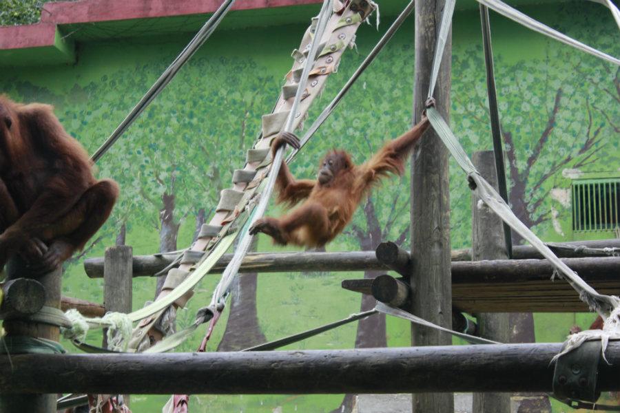 Recinto de los orangutanes en el Zoo de Santillana del Mar