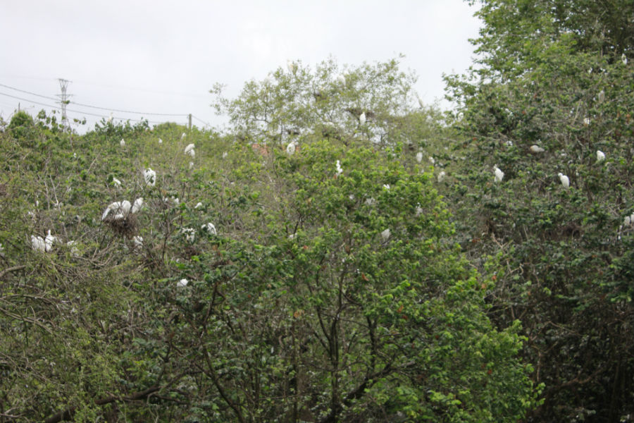 En los alrededores del Zoo de Santillana del Mar hay una gran colonia de pájaros