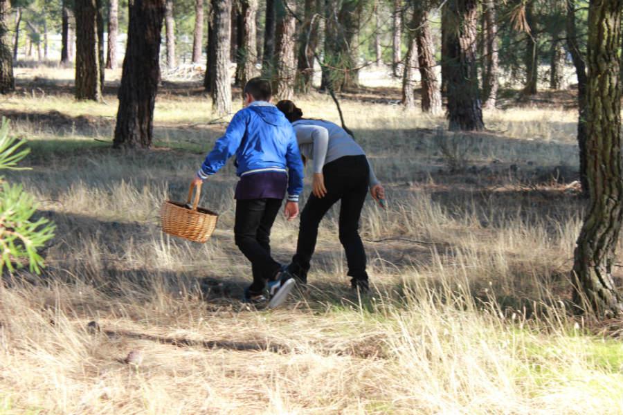 Una excursión para buscar setas con los niños es un plan ineludible en otoño